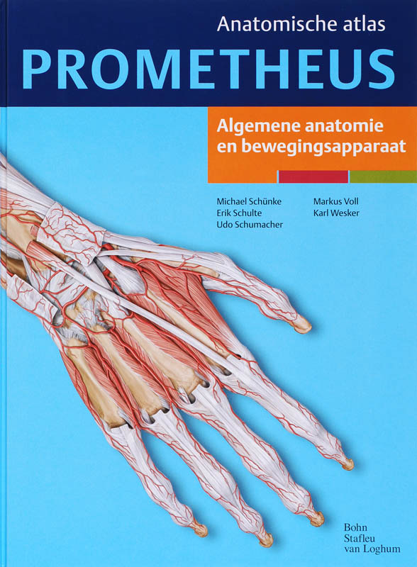 Sobotta Tabellen over spieren, gewrichten en zenuwen